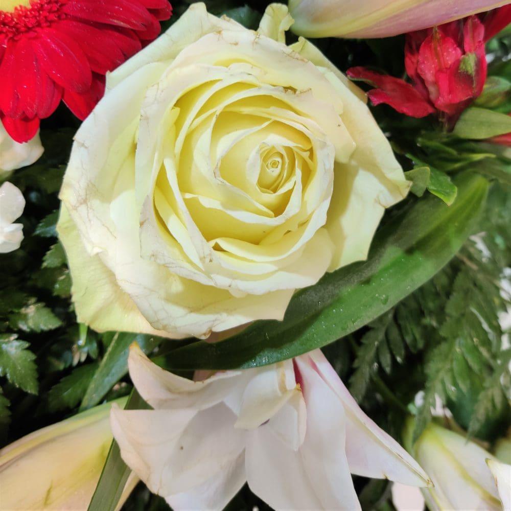 rosa corona funeraria