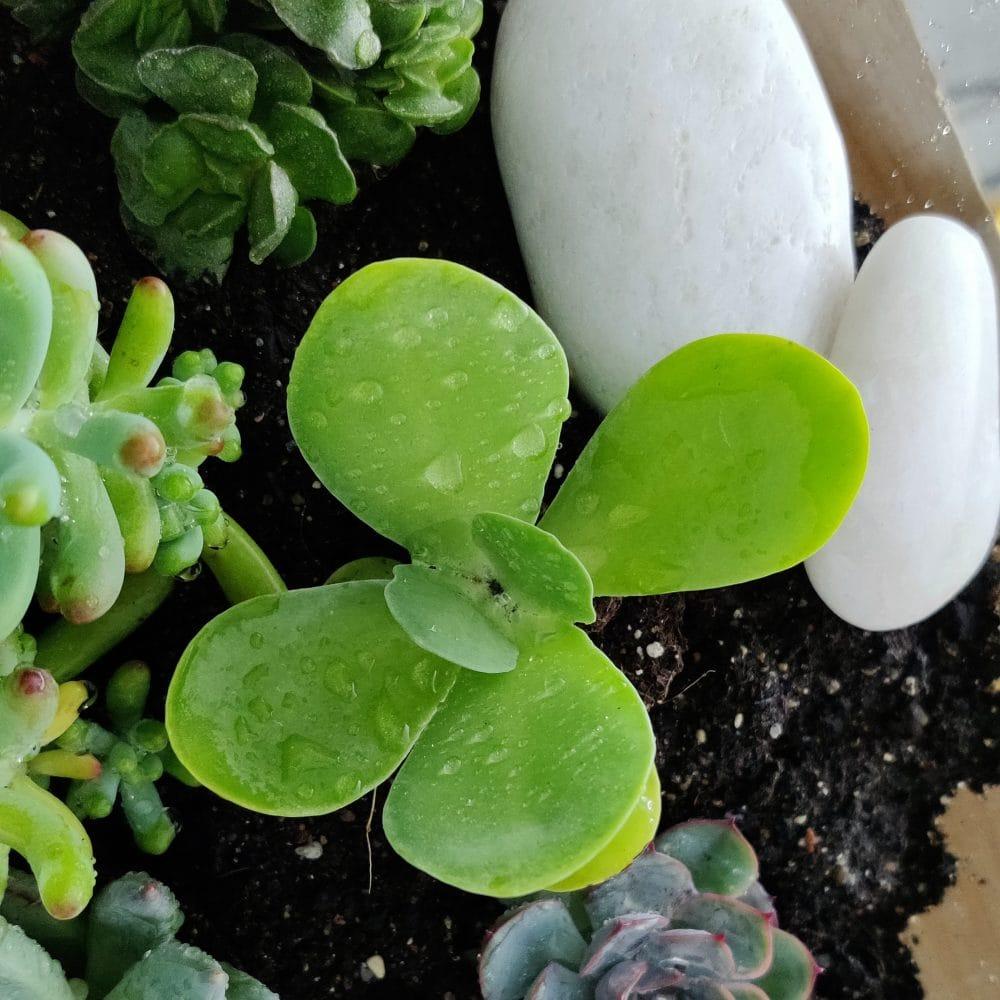 centro plantas crasas
